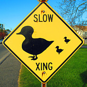 Duck Crossing Sign Print by Barbara McDevitt