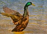 Deborah Benoit - Duck Duck Goose
