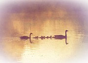 Geese Digital Art Prints - Duck Family Print by Bill Cannon