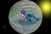 Balls Originals - Duck In A Bubble  by Jeff  Swan