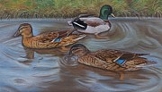 Patterned Pastels - Duck Pond by Lucy Deane