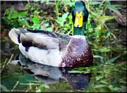 Mikki Cucuzzo - Duck Portrait