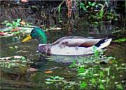 Mikki Cucuzzo - Duck Profile