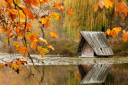 Autumn Trees Prints - Ducks House Print by Evgeni Dinev