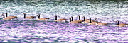 Brian Sereda - Ducks in a row