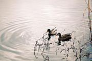 Maria Villamera - Ducks in love?