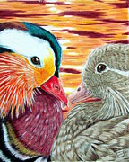 Mandarin Drawings - Ducks in Love by Shannon Clements