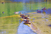 Chuck Staley Mixed Media Framed Prints - Ducks in the Park Framed Print by Chuck Staley