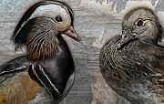 Ducks - Mandarin Ducks  Print by Liane Wright