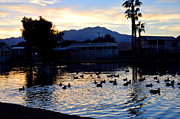 Diane Lent - Ducks on a pond at...