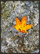 Fallen Leaf Posters - Duet Poster by Wendy J St Christopher