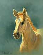 Dun Colt Portrait Print by Paul Krapf