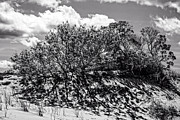Frank Winters - Dune Bush