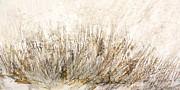 Dune Print by Christine Lamade