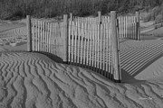 Suzanne Gaff - Dune Fence in Black ...