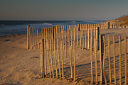 Sand Fences Acrylic Prints - Dune Fences At First Light I Acrylic Print by Steven Ainsworth