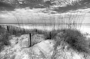 Beach Scenes Posters - Dune Fences Poster by Debra and Dave Vanderlaan