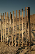 Sand Fences Posters - Dune Fences Early Morning II Poster by Steven Ainsworth