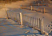 Sand Fences Acrylic Prints - Dune Fences Early Morning Acrylic Print by Steven Ainsworth