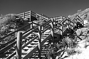 Wooden Stairs Posters - Dune Steps 04 Poster by Rick Piper Photography