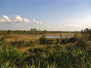 Polk County Florida Photos - Dune Vista II. Lake Wales Ridge. by Chris  Kusik