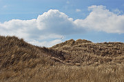 Flying Seagull Posters - Dunes Poster by Angela Doelling AD DESIGN Photo and PhotoArt