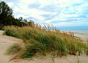 Indiana Dunes Photos - Dunes of Indiana by Trisha Shrum Shrader
