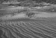 Suzanne Gaff - Dunescape in Black a...