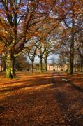 Fall Photos Prints - Dunham Massey Print by Louise Heusinkveld