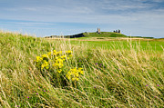 Embleton Prints - Dunstanburgh Castle with wildflowers Print by David Head