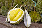 Durian Prints - Durian 2 Print by David Gn