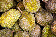 Durian Prints - Durian Fruit Print by Tim Hester