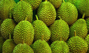 Ranjini Kandasamy - Durian