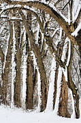 Winter Storm Metal Prints - During the Storm Metal Print by JC Findley