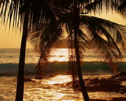 Tropical Photos - Dusk by Athala Carole Bruckner
