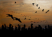 Canadian Geese Pastels - Dusk Flight by R Kyllo
