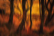 Photomanipulation Photo Prints - Dusky Memories of Long Forgotten Trees Print by Derek Beattie