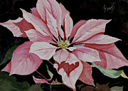 Christmas Flower Paintings - Dusties Poinsettia by Sam Sidders