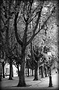 Den Prints - Dutch City Trees - Black and White Print by Carol Groenen