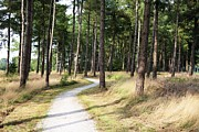 Nederland Photo Prints - Dutch Country Bicycle Path Print by Carol Groenen