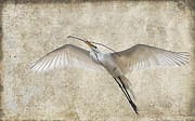 Great Egret Framed Prints - Duty Calls #2 Framed Print by Betty LaRue