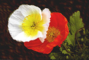 Flowers Of Paradise - Eager Poppies by Ben and Raisa Gertsberg