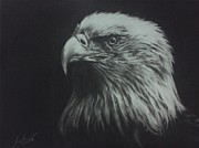 Charcoals Drawings Framed Prints - Eagle 2 Framed Print by M Helmy Abdullah