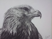 Charcoals Drawings Framed Prints - Eagle 4 Framed Print by M Helmy Abdullah