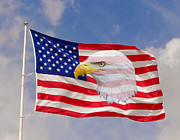 Patriot Photo Originals - eagle and a Flag by Dennis Dugan
