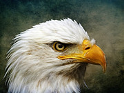 Animal Patriotic Art Framed Prints - Eagle Art Framed Print by Steve McKinzie