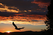 Flying Photos - Eagle at Sunset by Shane Bechler