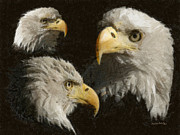 Bald Eagle Framed Prints - Eagle Collage Framed Print by Ernie Echols