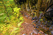 Eagle Creek Prints - Eagle Creek Rain Forest Trail Print by Adam Jewell