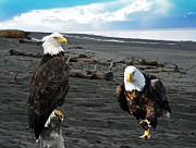 Bald Eagles Posters - Eagle Determination Poster by Debra  Miller